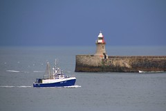 SN36 (North Shields) entering the harbour, passing lighthouse of South shields (Frans.Sellies) Tags: england boat fishing luc trawler img7599 sn36
