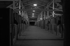 Stables (shiggyninty) Tags: street horses people white black color colour person photography photo photos sony sydney australia human nsw kensington alpha humans 6000 coogee randwick