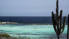 Miragem (faneitzke) Tags: ocean sea summer cactus praia beach nature mar natureza aruba caribbean caribe oranjestad caribbeansea babybeach