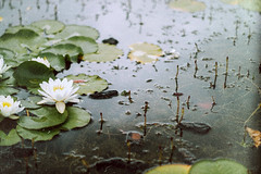 Frog (Happily Pale Faces) Tags: travel france nature water photography nikon details frog explore photograph
