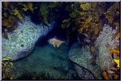 230905 BI Scene (LoxPix2) Tags: loxpix australia underwater fish fiji vanuatu shark noumea cairns ascidian sponge