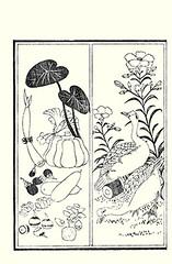 Left  maidenhair tree, pumpkin, eggplant, gourd and apple; Right  oleander and domestic goose (Japanese Flower and Bird Art) Tags: flower tree bird art apple japan pumpkin japanese book ginkgo eggplant picture goose domestic gourd apocynaceae oleander anser woodblock cucurbitaceae domestica solanum biloba maidenhair pepo ukiyo solanaceae malus rosaceae anatidae nerium indicum cygnoides cucurbita asai ginkgoaceae melongena osui readercollection