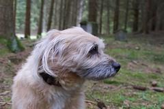 Kenny im Wald (olyxander) Tags: dog hund kenny