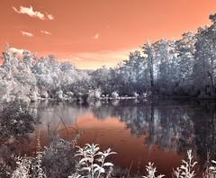 Serenity (Neal3K) Tags: trees sky orange lake reflection water clouds georgia ir amber pond gray wetlands infraredcamera henrycountyga kolarivisionmodifiedcamera