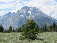 Lone tree and Mt. Moran (Joel Abroad) Tags: grandteton nationalpark mountains wyoming mtmoran lonetree