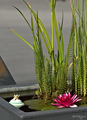 the little pond (torsten hansen (berlin)) Tags: light lightpainting berlin painting licht paint hansen malen lichtmalerei torsten malerei wwwdiehansensde wwwtorstenhansenfotografiede wwwlightpaintingberlinde wwwtorstenhansende