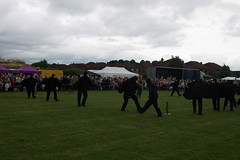 Moulton Crow Fair 2016 (jharding534) Tags: scarecrows moulton crowfair