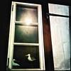 Sunbathing birds... (iEagle2) Tags: bird window harbor sweden seagull iphone grundsund swedishwestcoast iphone4 hipstamatic