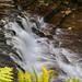 CBP_Tassie_Wilderness_LR-344