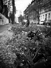 St.Pauli - Kastanienallee (chicitoloco) Tags: hamburg walkabout asphalt stpauli bitumen kastanienallee chicitoloco