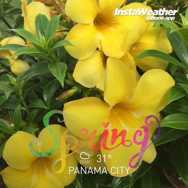 Made with @instaweatherpro Free App! #instaweather #instaweatherpro #weather #wx #panamacity #panamacity #day #rain #panamá #nature #spring #goodweather #flowers #havingfun #earth #great #pty #PA