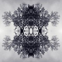 Treeflections 1