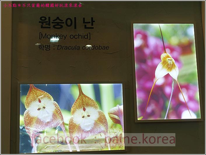 高陽國際花卉博覽 (54).JPG