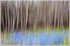 20150421. Scilla. Camera painting. 3915 (Tiina Gill (busy)) Tags: blue plant flower tree spring flora estonia scilla icm alder camerapainting intentionalcameramovement