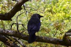 DSC_2447 (Vlad Proklov) Tags: birds richmond