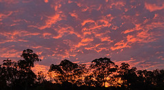 Sunset Panorama (brentflynn76) Tags: trees sunset sky panorama color colour nature silhouette skyline clouds twilight view vibrant panoramic bendigo