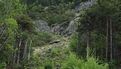 fort (bulbocode909) Tags: nature suisse vert arbres printemps valais roche montagnes forts