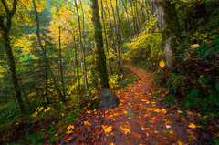 Autumn path (Vasilic Bogdan) Tags: autumn mountains cold reflection fall nature rain oregon waterfalls leafs creeks