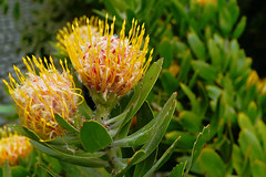 Mai Botanik - 2016-0001_Web (berni.radke) Tags: may growth mai botany botanicalgarden mnster botanik botanischergarten wachstum