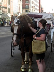 A moment of connection with two gentle spirits. (kennethkonica) Tags: street city summer people horse usa america canon midwest random outdoor candid indianapolis streetphotography indy indiana social persons global hoosiers canonpowershot marioncounty