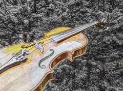 My Fiddle (photo fiddler) Tags: trees backyard top may violin spruce 2016 fiddke
