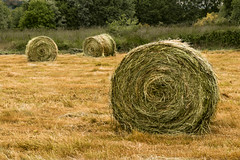 Things change. Life doesn't stop for anybody. (dorablancoheras) Tags: bale paca hierba straw paja dorado golden primavera verde green spring galicia