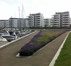 Tuborg Havn and Havnepark (annindk) Tags: copenhagen housing harbours hellerup