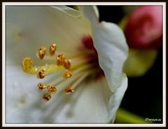 _JVA6800 (mrjean.eu) Tags: park pink flowers blue red roses white france flower macro green nature fleur rose yellow fleurs nikon botanic lorraine botanique parc metz communal 105mmf28