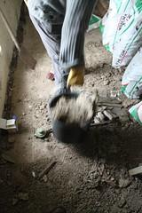 IMG_3093 (De Tuinen van Servaas en Dorothe) Tags: duiven mest dakgoot stof gebinte