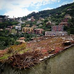 Foto-18-06-16-12-01-52 (fdpdesign) Tags: camogli portofino escursionismo 2016 liguria italia italy apple iphone mare monti sentieri sea instagram