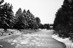 Frozen River near Lake tahoe (_Jose_Sifuentes_) Tags: trees sky blackandwhite lake snow plant tree ice nature public monochrome landscape frozen photo outdoor flag hike safety f level info safe viewing privacy additional