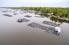 aerial view fish cage (sydeen) Tags: life wood travel sky fish tree home nature water beautiful river landscape asian countryside boat colorful asia village riverside natural outdoor background traditional farming floating cage aerial malaysia raft shallow malacca kelantan tumpat jubakar