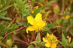 Bogota_2016 (ana_ge) Tags: flower southamerica colombia bogota americadosul 2016 americadelsur monteserrate