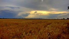 Grain Field - Khorasan , Iran (daniyal62) Tags: lg nexus 5x iran khorasan mashhad nature landscape