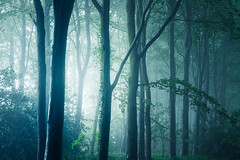 Bacton Wood 04/06/2016 (Matthew Dartford) Tags: wood tree lines horizontal fog forest woodland soft glow bokeh norfolk foggy spooky glowing layers distance depth eastanglia sidelight