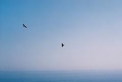 (oceanus2007 (***busy***)) Tags: film zeiss 50mm iso200 fuji pacific f14 contax 200 shikoku kochi aria planar fujicolor susaki katabirazaki