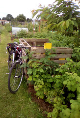 Allotment With Bicycle (samsaundersleeds) Tags: bicycle compost pallets allotment