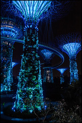 Like a foreign planet (Ingo Tews) Tags: blue trees light night garden lights evening abend licht singapore grove nacht palm blau bäume singapur bluelight lichter blaueslicht remarkable palmen marinabay gardensbythebay turnsblue supertrees leuchtetblau