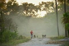 Course (Davy Steinhauer) Tags: road boy sunset bike fuji ride path belize smoke goats backlit dust carmelita xt1 snapseed