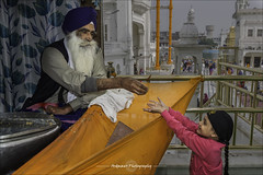 Kadar Prashad - Harmandir Sahib (ardmawrphotography) Tags: india religion devotion punjab amritsar goldentemple harmandirsahib akaltakht  kadahprashad