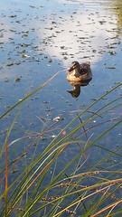 20150116_085749 (kiwinproud) Tags: aucklandbotanicalgardens