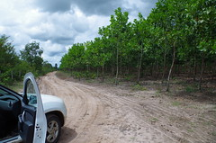 "GWD Forestry - Brazil Images <a style=""margin-left:10px; font-size:0.8em;"" href=""http://www.flickr.com/photos/47172958@N02/17155952511/"" target=""_blank"">@flickr</a>"