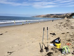 ESRM sandy beach monitoring El Capitan State Beach 05-20-15g