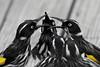 New Holland Honeyeater (gus.meredith) Tags: nature birds fauna canon wildlife australian australia perth naturalworld westernaustralia floraandfauna newhollandhoneyeater phylidonyrisnovaehollandiae honeyeaters bushbirds canon7dmark2 canon7dii canon7dmk2 ef100400mmf4556lisiiusm