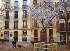 Mi Madrid favorito 7. Escenas. My favourite Madrid 7. Scenes. (Esetoscano) Tags: madrid plaza people espaa square persona spain gente oldtown madridantiguo guardiadecorps zonazonecondeduque