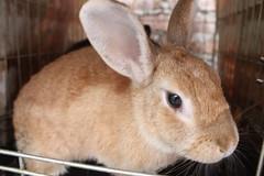 IMG_7630 (Gioser_Chivas) Tags: rabbit bunny animal conejo mascota vertebrado gioserchivas