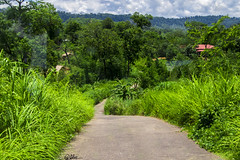 Sajek.....Beautiful Bangladesh (Halder Ujjwal) Tags: road cloud house green landscape hill traks clour