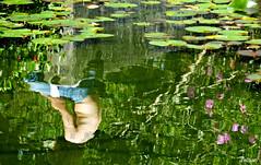 Hombre al agua! (Franco DAlbao) Tags: man reflection primavera water spring pond agua fuji reflejo estanque waterlillies hombre nenfares dalbao francodalbao