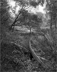 , 6 (Yuriy Sanin) Tags: trees blackandwhite forest landscape boat shanghai 4x5 largeformat sanin  nullah yuriy      wistasp   symmar13556