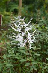 (lulun & kame) Tags: plant flower  lumixg20f17